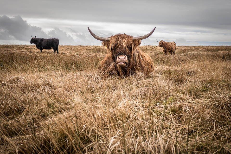 brighton Photographer Cow Sussex
