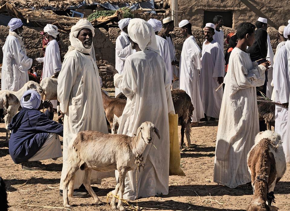 sudan-goats
